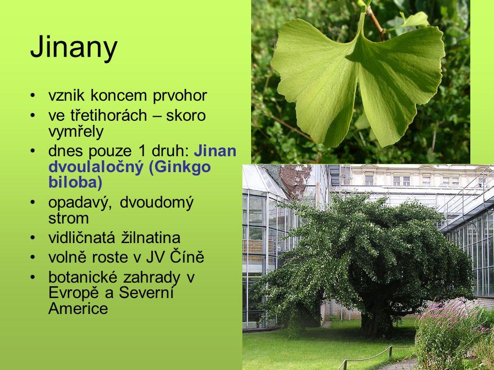 Jinany vznik koncem prvohor ve třetihorách – skoro vymřely dnes pouze 1 druh: Jinan dvoulaločný (Ginkgo biloba) opadavý, dvoudomý strom vidličnatá žilnatina volně roste v JV Číně botanické zahrady v Evropě a Severní Americe