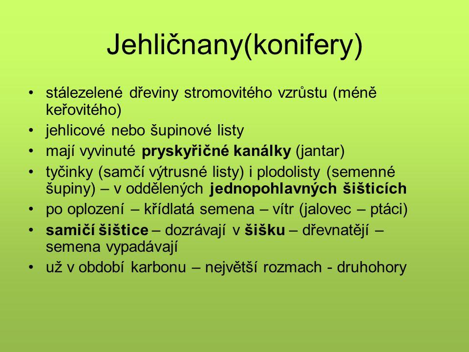 Zástupci jehličnanů v ČR 8 původních (autochtonních) druhů: SMRK OBECNÝ JEDLE BĚLOKORÁ BOROVICE LESNÍ BOROVICE KLEČ MODŘÍN OPADAVÝ JALOVEC OBECNÝ TIS ČERVENÝ