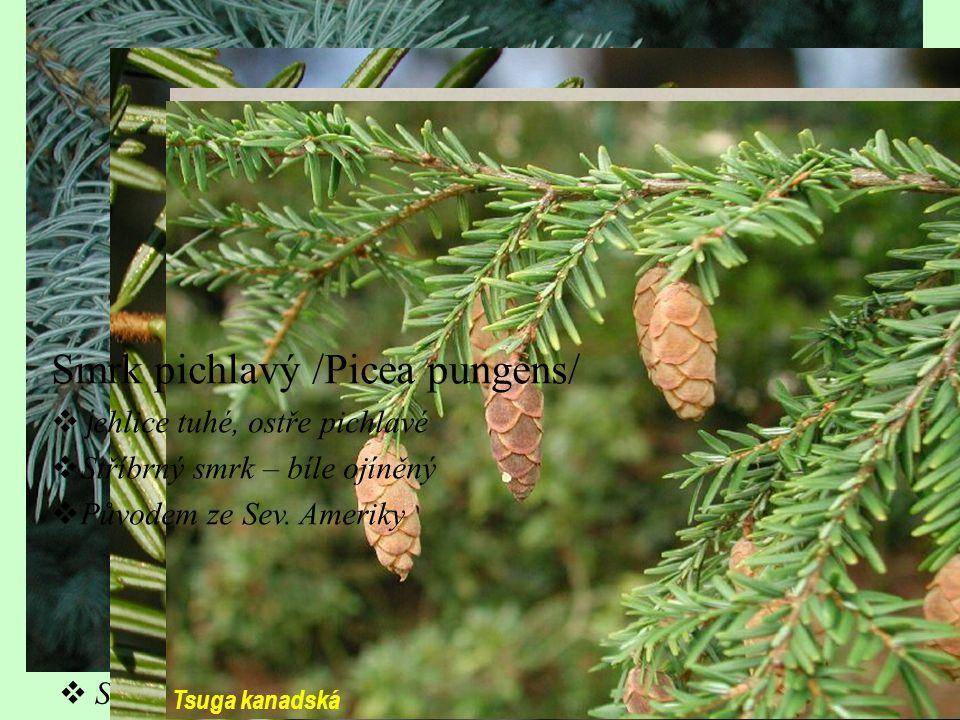 Jedle bělokorá /Abies alba/ (40–50)  Jehlice ve dvou řadách, bez brachyblastů, ze spodní strany bílé proužky  Šištice jsou přímé a rozpadavé Smrk ztepilý /Picea abies/ (40)  Mělkokořenící strom  Šišky jsou rozpadavé a směřují dolů Tsuga kanadská  Jehlice se 2 proužky na rubu  Šištice malá  Sev.