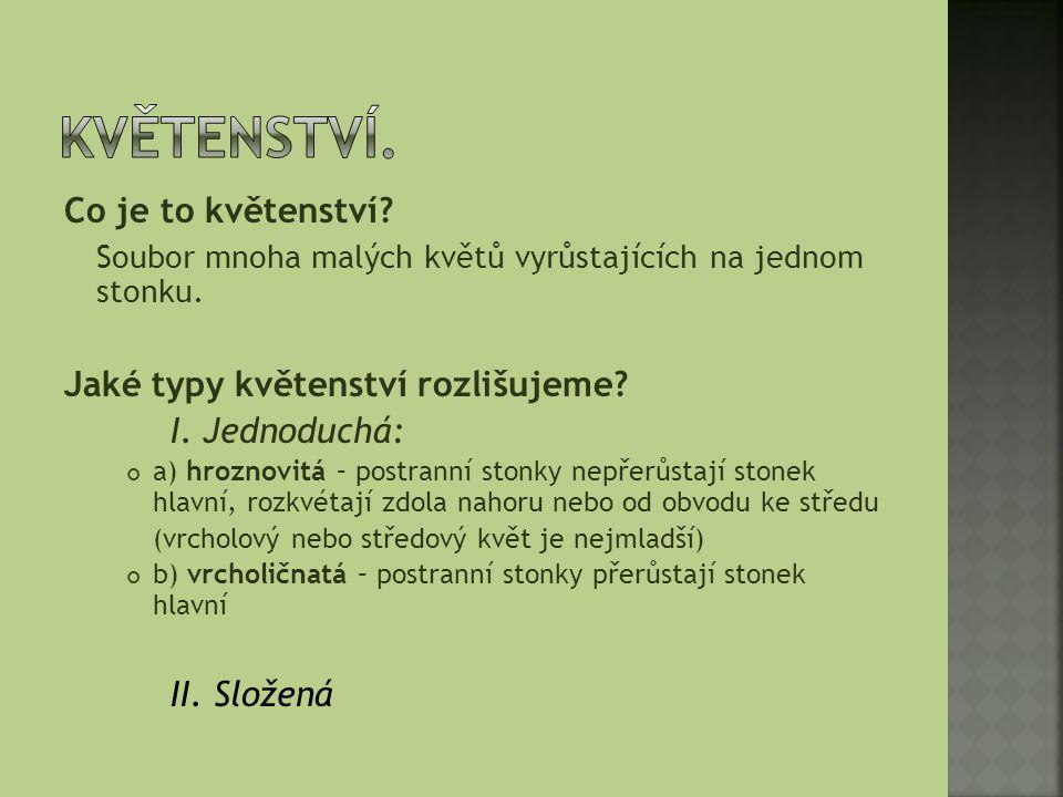 Hrozen z vijanů jírovec maďal 8