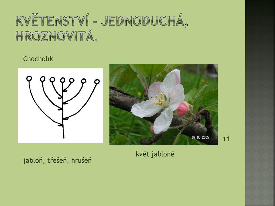 jabloň, třešeň, hrušeň Chocholík 11 květ jabloně