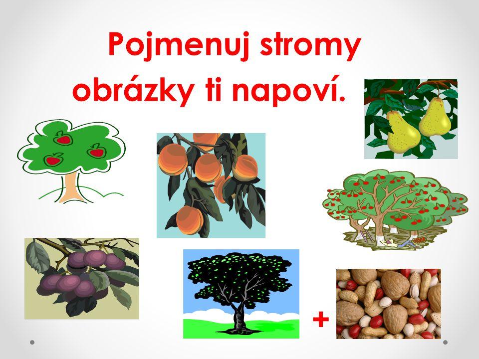 Pojmenuj stromy obrázky ti napoví. +