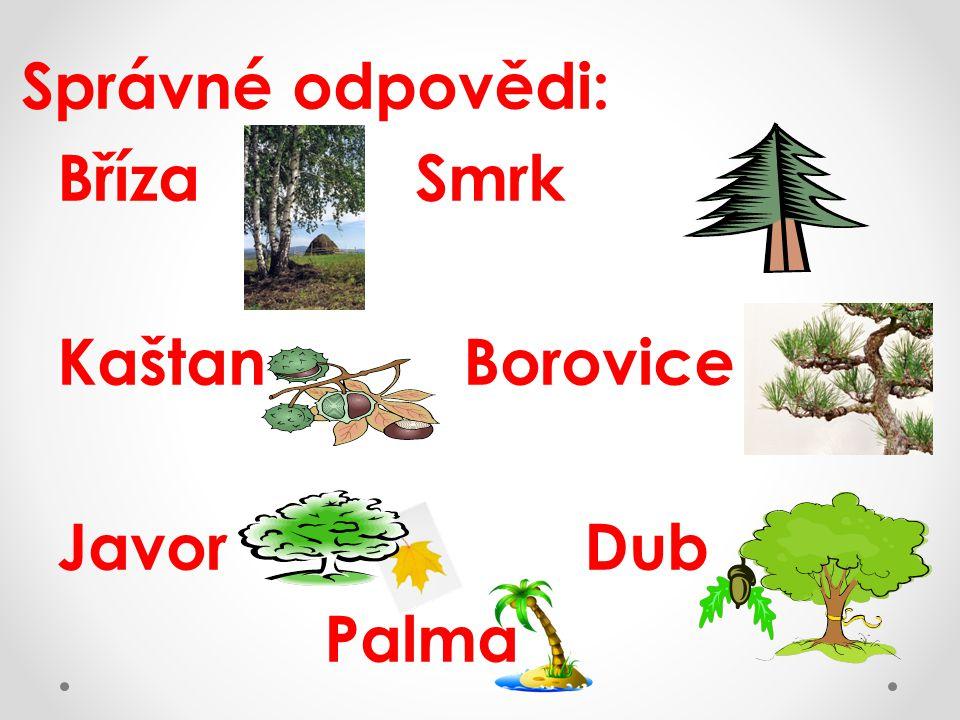 Správné odpovědi: Bříza Smrk Kaštan Borovice Javor Dub Palma