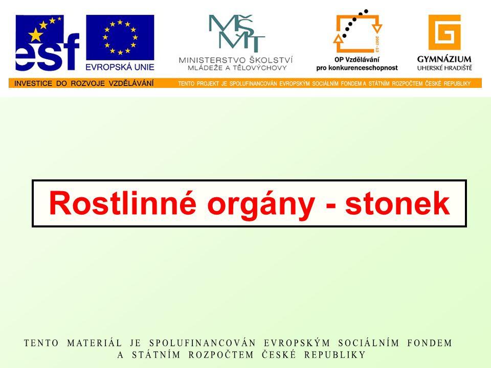 Rostlinné orgány - stonek