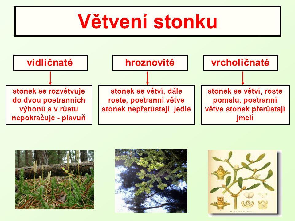 Větvení stonku stonek se rozvětvuje do dvou postranních výhonů a v růstu nepokračuje - plavuň vidličnatéhroznovitévrcholičnaté stonek se větví, dále r