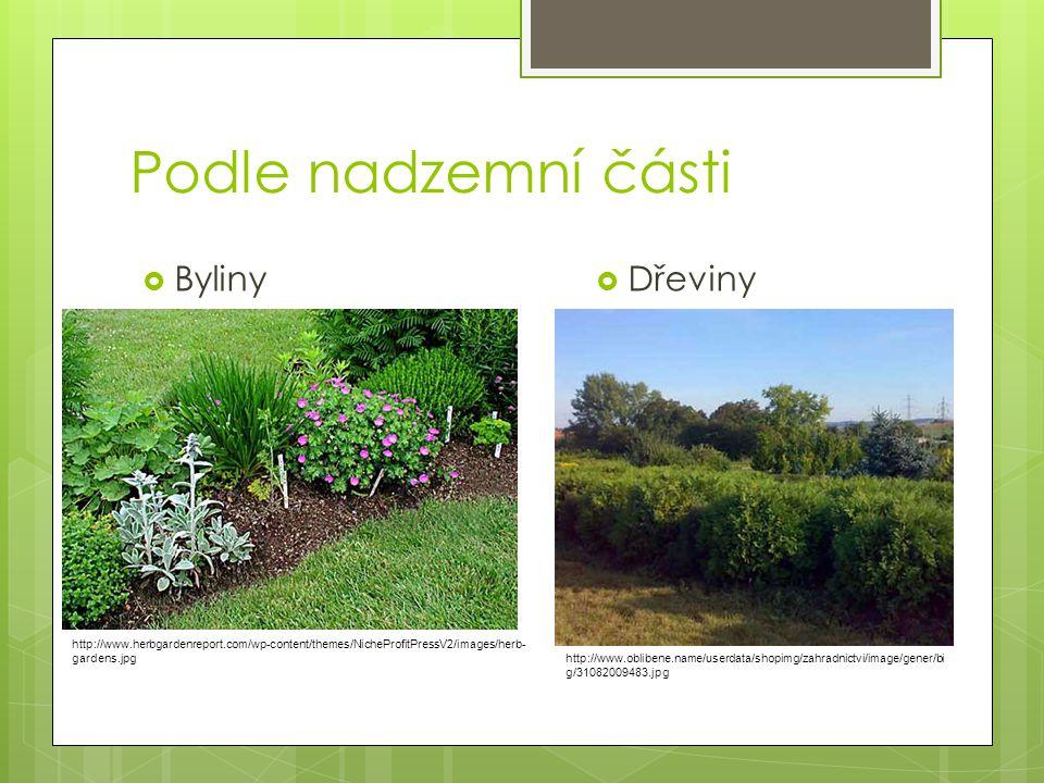 Podle nadzemní části  Byliny  Dřeviny http://www.oblibene.name/userdata/shopimg/zahradnictvi/image/gener/bi g/31082009483.jpg http://www.herbgardenr