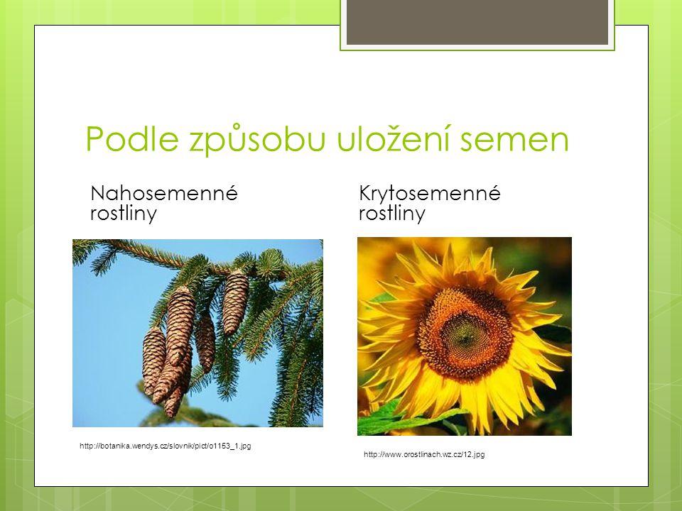 Podle způsobu uložení semen Nahosemenné rostliny Krytosemenné rostliny http://botanika.wendys.cz/slovnik/pict/o1153_1.jpg http://www.orostlinach.wz.cz