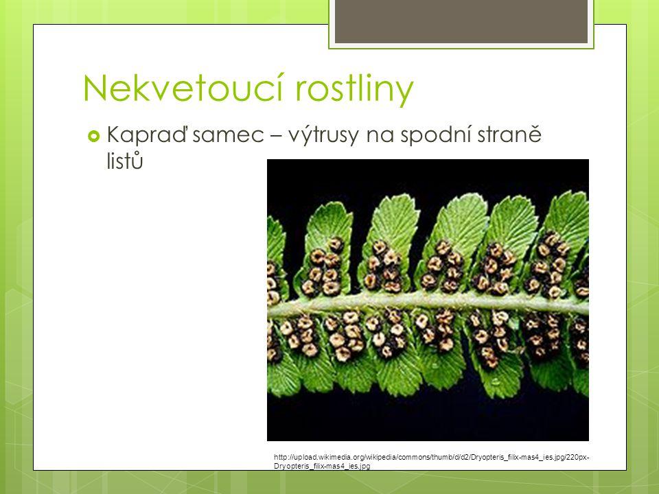 Nekvetoucí rostliny  Kapraď samec – výtrusy na spodní straně listů http://upload.wikimedia.org/wikipedia/commons/thumb/d/d2/Dryopteris_filix-mas4_ies