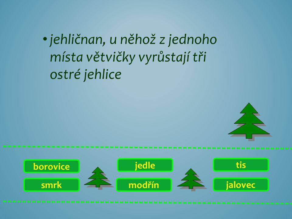 smrk borovice jalovec tis modřín jedle jehličnan, u něhož z jednoho místa větvičky vyrůstají tři ostré jehlice