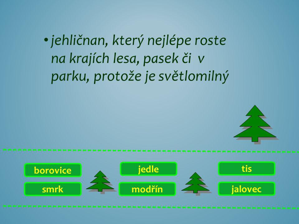 smrk borovice jalovec tis modřín jedle jehličnan, který nejlépe roste na krajích lesa, pasek či v parku, protože je světlomilný