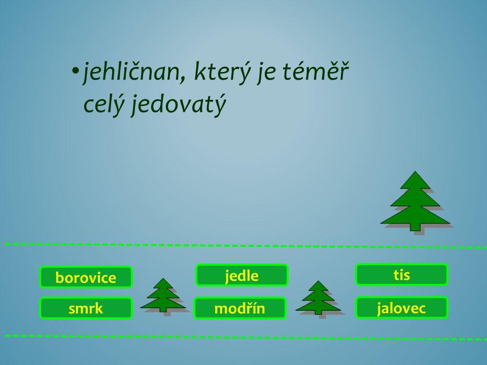 smrk borovice jalovec tis modřín jedle jehličnan s jehlicemi, které vyrůstají ve svazečcích po deseti a více