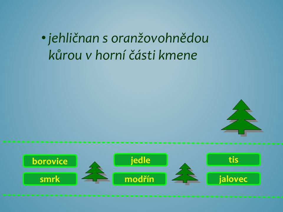 smrk borovice jalovec tis modřín jedle jehličnan s oranžovohnědou kůrou v horní části kmene