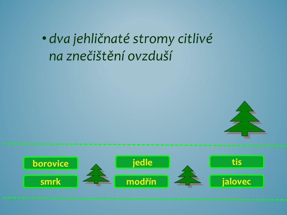 smrk borovice jalovec tis modřín jedle jehličnan, jehož část se používá k ochucování džinu a borovičky, rovněž do omáček či k ochucení zvěřiny