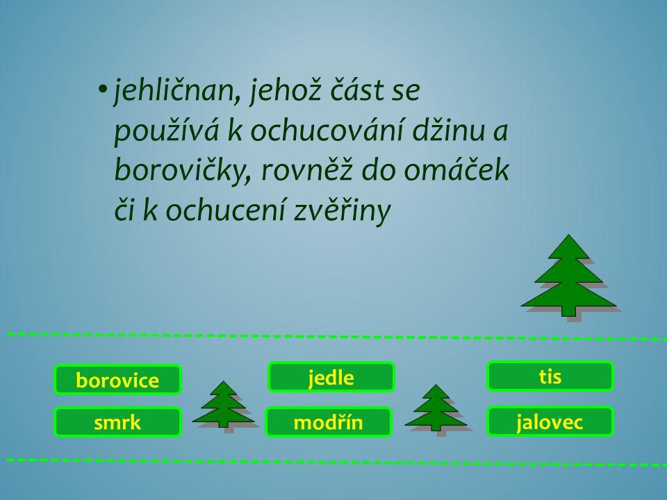 smrk borovice jalovec tis modřín jedle jehličnan, který díky hlubokým kořenům je schopen růst v písčitých půdách