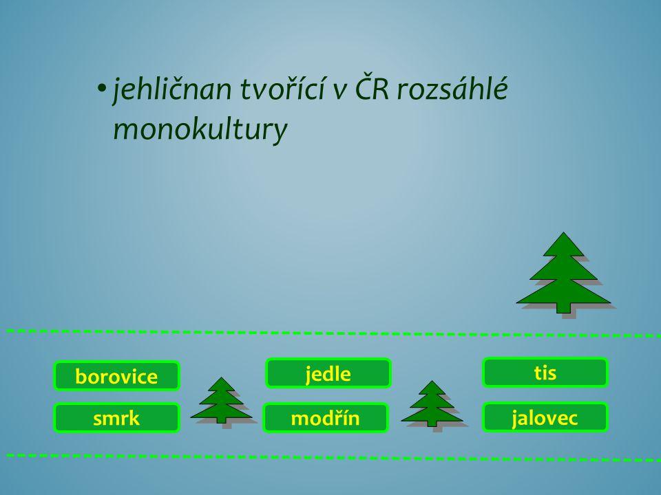 smrk borovice jalovec tis modřín jedle jehličnan tvořící v ČR rozsáhlé monokultury