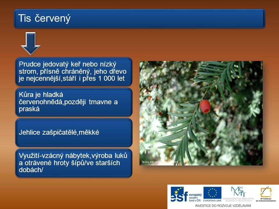 Tis červený Prudce jedovatý keř nebo nízký strom, přísně chráněný, jeho dřevo je nejcennější,stáří i přes 1 000 let Kůra je hladká červenohnědá,později tmavne a praská Jehlice zašpičatělé,měkké Využití-vzácný nábytek,výroba luků a otrávené hroty šípů/ve starších dobách/