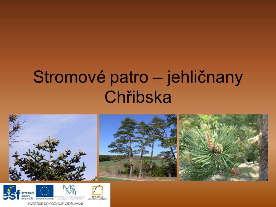 Jehličnaté lesy Jehličnaté stromy Tis Borovice JedleModřínSmrk Jehličnatý strom si své listy (jehlice) drží po celý rok.