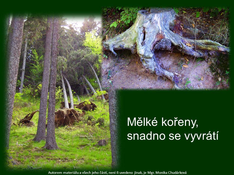 Autorem materiálu a všech jeho částí, není-li uvedeno jinak, je Mgr. Monika Chudárková Mělké kořeny, snadno se vyvrátí