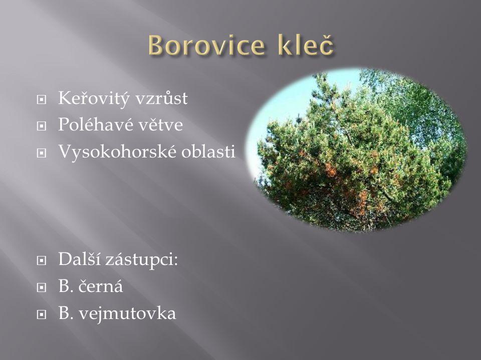  Keřovitý vzrůst  Poléhavé větve  Vysokohorské oblasti  Další zástupci:  B. černá  B. vejmutovka