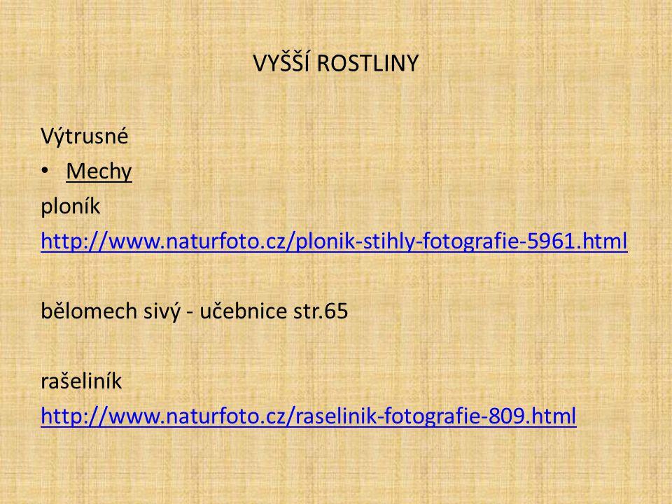 VYŠŠÍ ROSTLINY Výtrusné Mechy ploník http://www.naturfoto.cz/plonik-stihly-fotografie-5961.html bělomech sivý - učebnice str.65 rašeliník http://www.n