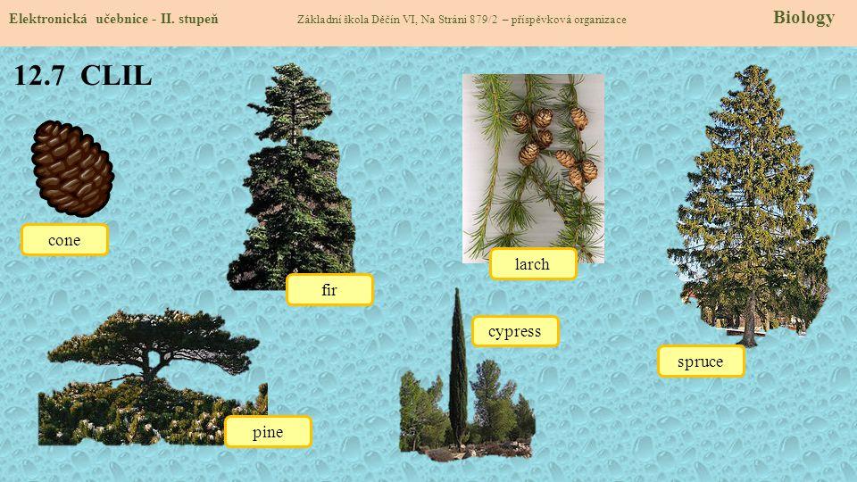 12.7 CLIL Elektronická učebnice - II. stupeň Základní škola Děčín VI, Na Stráni 879/2 – příspěvková organizace Biology cone fir pine spruce larch cypr