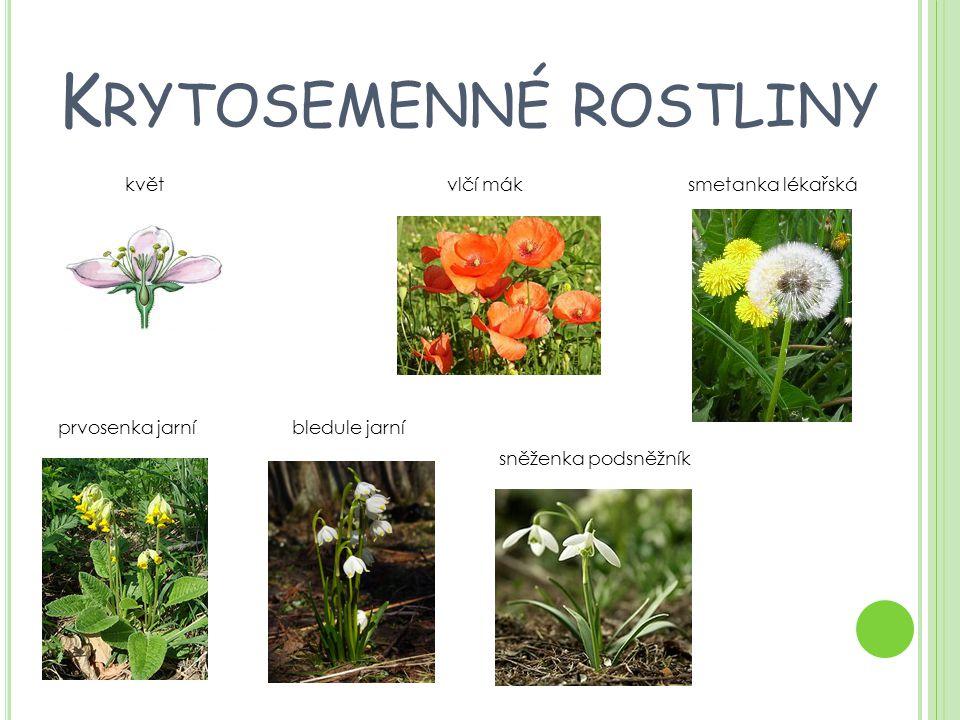 K RYTOSEMENNÉ ROSTLINY květ vlčí mák smetanka lékařská prvosenka jarní bledule jarní sněženka podsněžník
