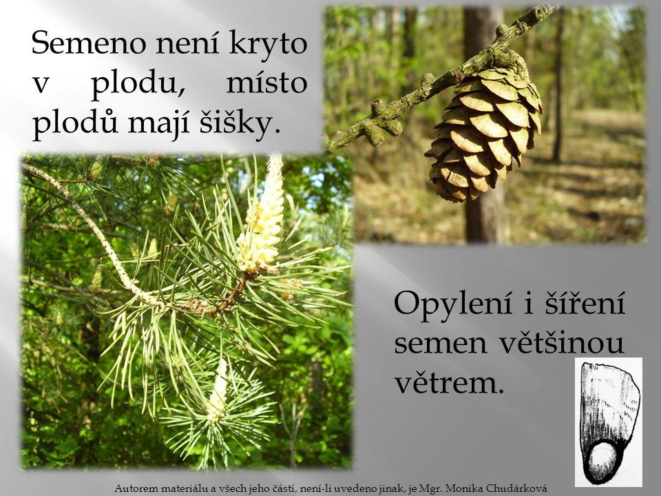 Semeno není kryto v plodu, místo plodů mají šišky. Autorem materiálu a všech jeho částí, není-li uvedeno jinak, je Mgr. Monika Chudárková Opylení i ší