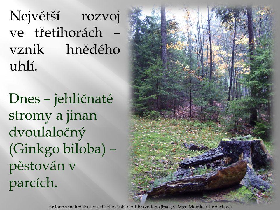 Borovice lesní: na skalách a písčitých půdách.Jehlice po dvou ve svazečku.