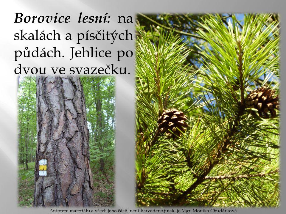 Borovice lesní: na skalách a písčitých půdách. Jehlice po dvou ve svazečku. Autorem materiálu a všech jeho částí, není-li uvedeno jinak, je Mgr. Monik