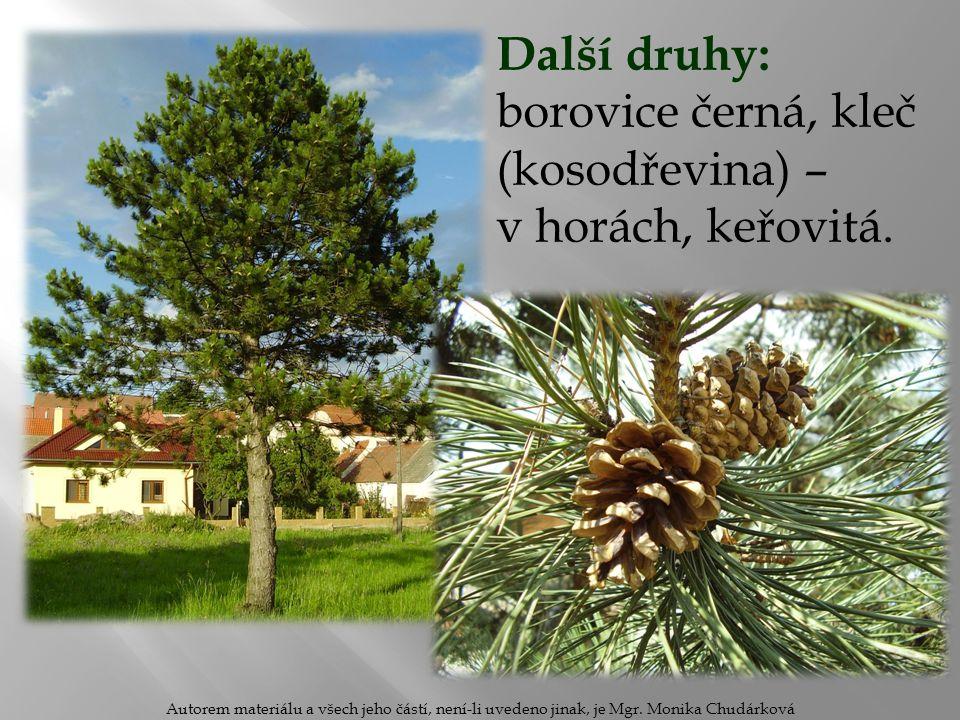 Další druhy: borovice černá, kleč (kosodřevina) – v horách, keřovitá. Autorem materiálu a všech jeho částí, není-li uvedeno jinak, je Mgr. Monika Chud