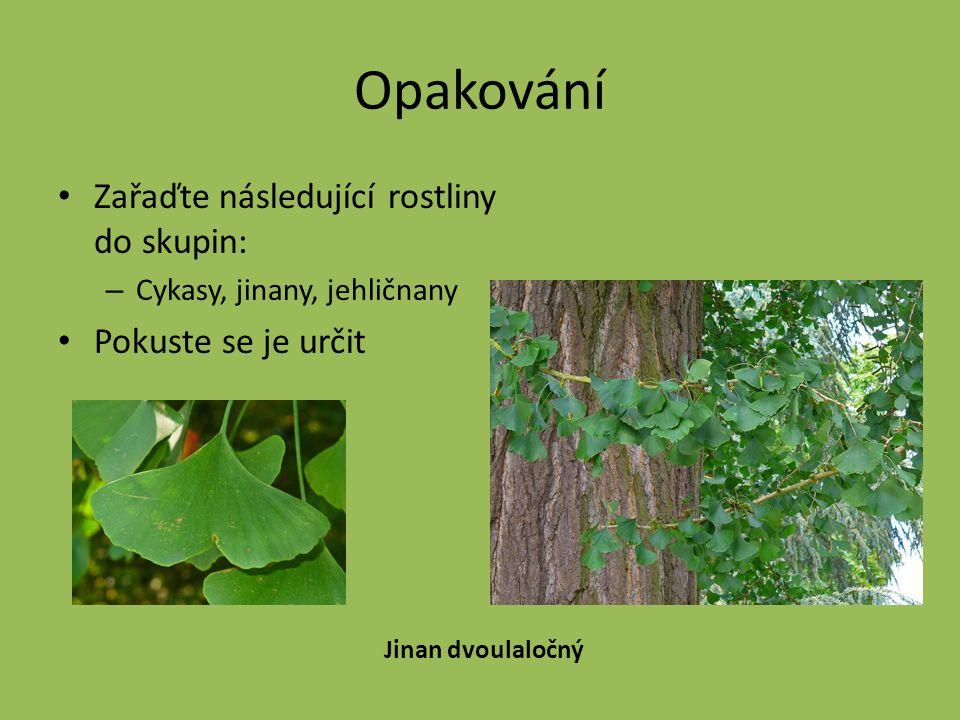 Opakování Zařaďte následující rostliny do skupin: – Cykasy, jinany, jehličnany Pokuste se je určit Jinan dvoulaločný