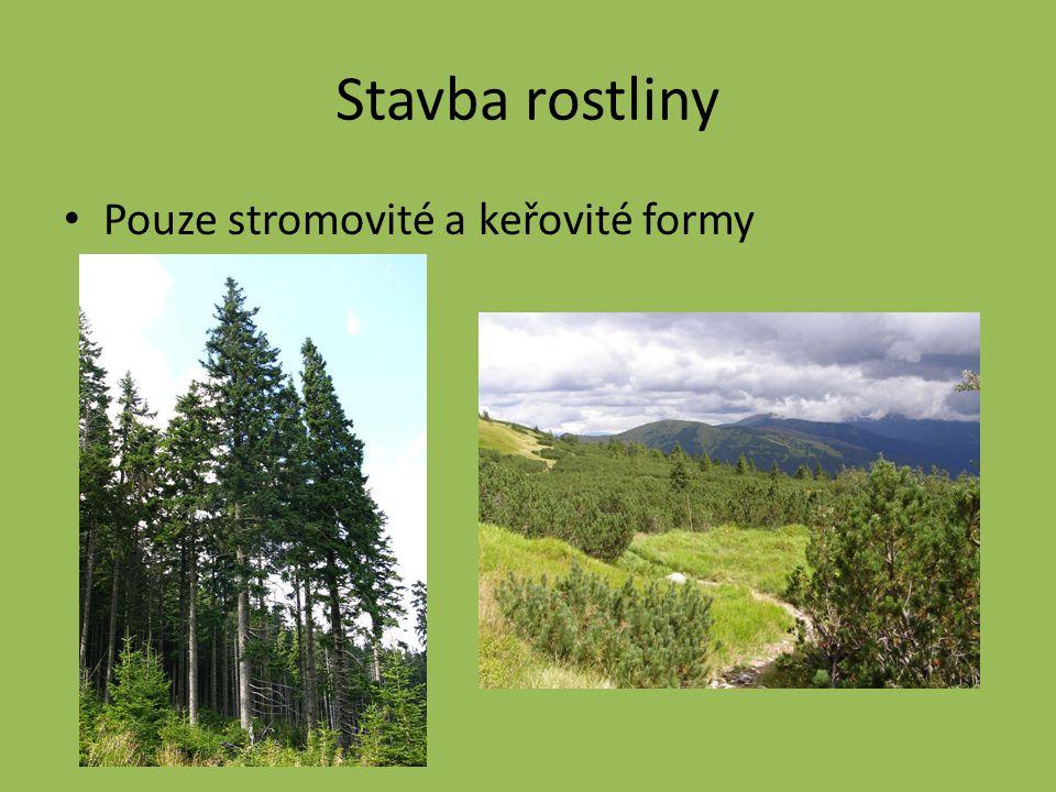 Stavba rostliny Pouze stromovité a keřovité formy