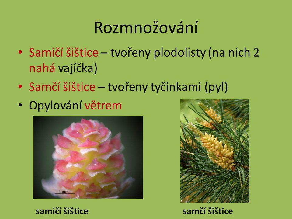 Použitá literatura a obrázky KANOTI, Keith.Pinus strobus [online].