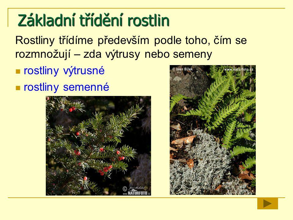 Rostliny výtrusné Rozmnožují se pomocí výtrusů.