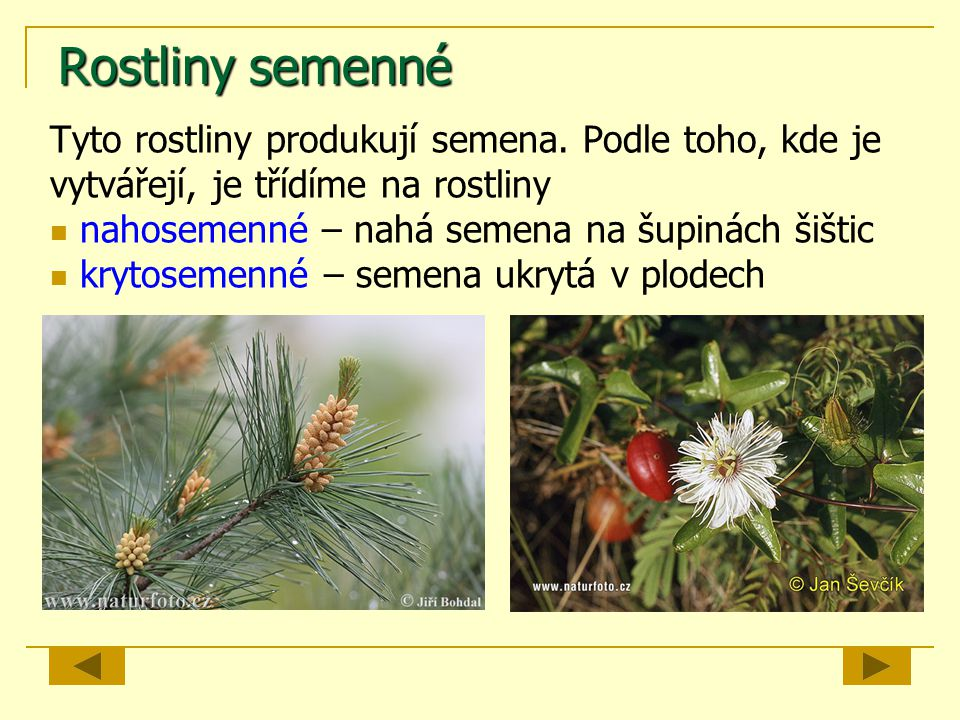 Rostliny semenné Tyto rostliny produkují semena. Podle toho, kde je vytvářejí, je třídíme na rostliny nahosemenné – nahá semena na šupinách šištic kry