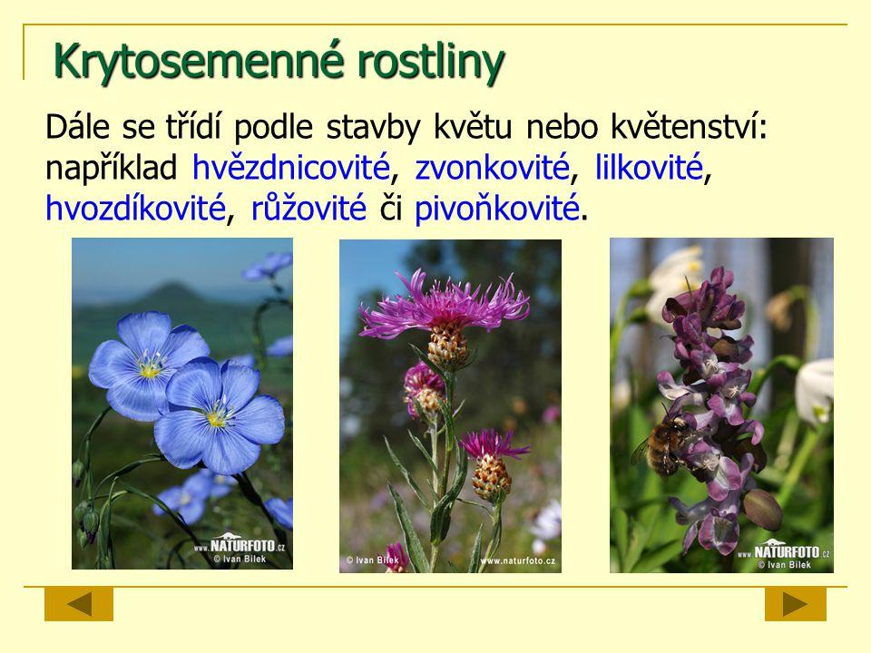 Opakování pro mladé přírodovědce rostliny výtrusnésemenné kapraďorosty mechorosty nahosemenné krytosemenné