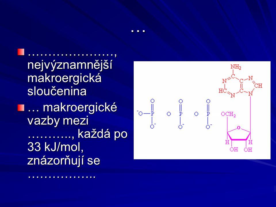 … …………………, nejvýznamnější makroergická sloučenina … makroergické vazby mezi ……….., každá po 33 kJ/mol, znázorňují se ……………..