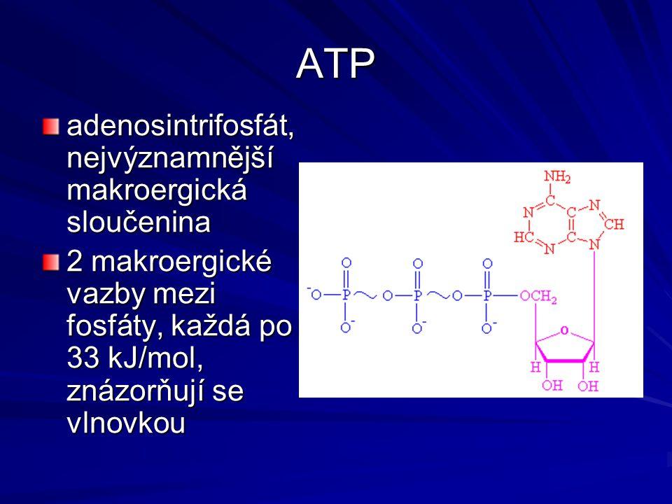 ATP adenosintrifosfát, nejvýznamnější makroergická sloučenina 2 makroergické vazby mezi fosfáty, každá po 33 kJ/mol, znázorňují se vlnovkou