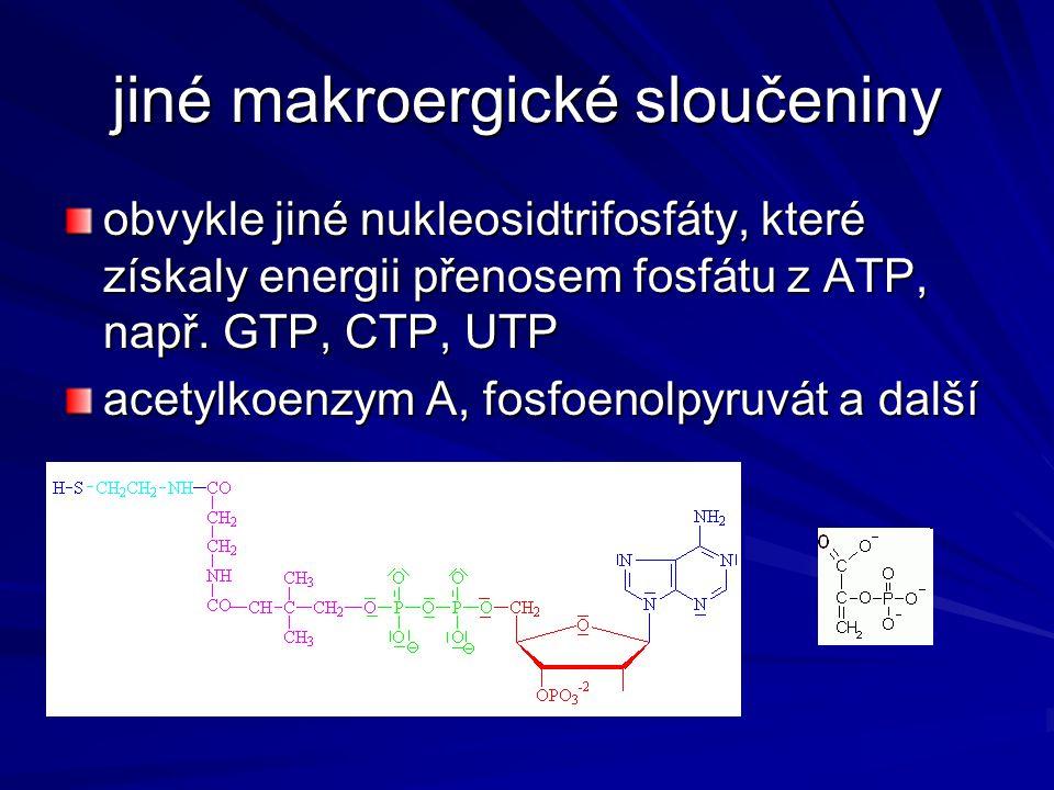 jiné makroergické sloučeniny obvykle jiné nukleosidtrifosfáty, které získaly energii přenosem fosfátu z ATP, např. GTP, CTP, UTP acetylkoenzym A, fosf