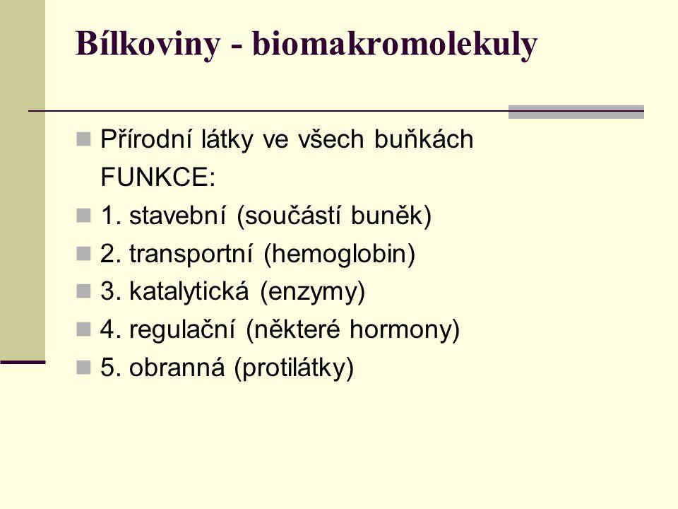 Bílkoviny - biomakromolekuly Přírodní látky ve všech buňkách FUNKCE: 1. stavební (součástí buněk) 2. transportní (hemoglobin) 3. katalytická (enzymy)