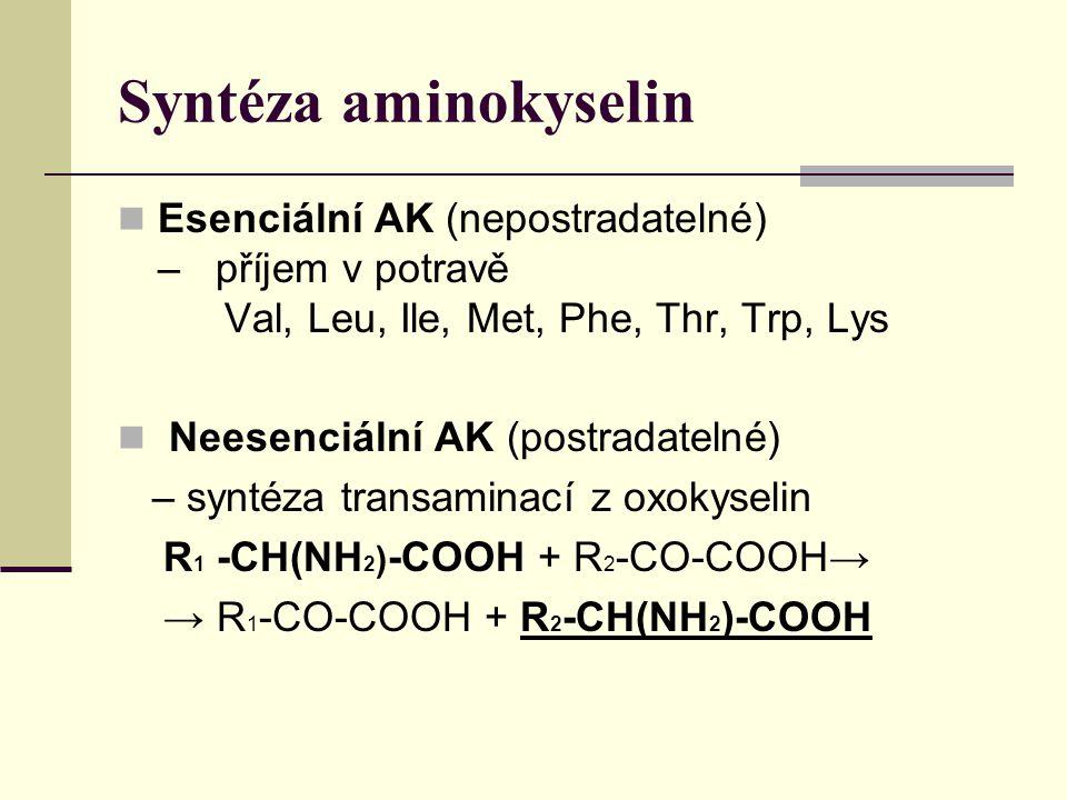Syntéza aminokyselin Esenciální AK (nepostradatelné) – příjem v potravě Val, Leu, Ile, Met, Phe, Thr, Trp, Lys Neesenciální AK (postradatelné) – syntéza transaminací z oxokyselin R 1 -CH(NH 2 ) -COOH + R 2 -CO-COOH→ → R 1 -CO-COOH + R 2 -CH(NH 2 )-COOH