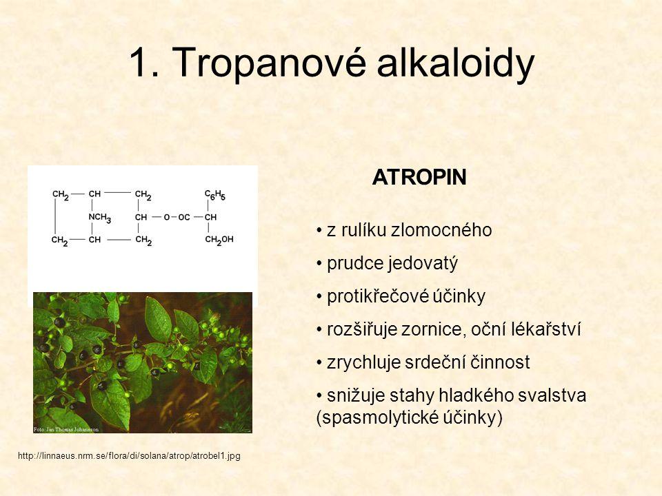 Tropanové alkaloidy http://varasto.syl.helsinki.fi/juttupankki/kuvat/koka.jpg KOKAIN hlavní alkaloid KOKY (jeř Jižní Amerika) původní využití – lokální anestetikum návyková droga, zvyšuje fyz.