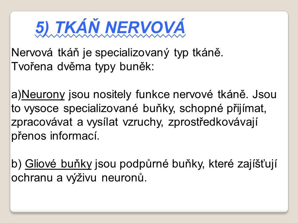 5) TKÁŇ NERVOVÁ Nervová tkáň je specializovaný typ tkáně. Tvořena dvěma typy buněk: a)Neurony jsou nositely funkce nervové tkáně. Jsou to vysoce speci