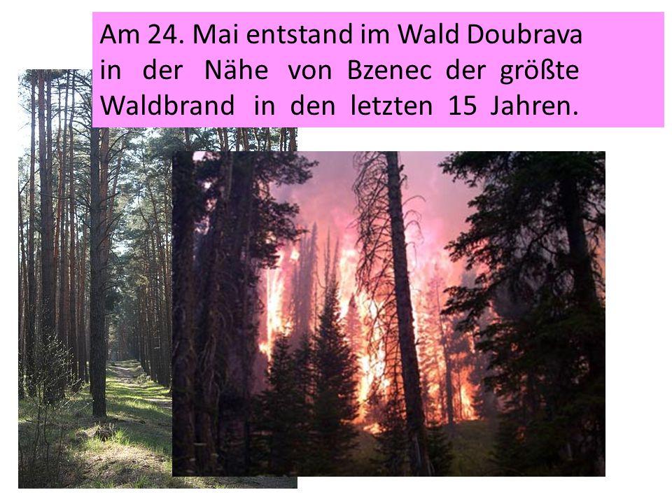 Am 24. Mai entstand im Wald Doubrava in der Nähe von Bzenec der größte Waldbrand in den letzten 15 Jahren.