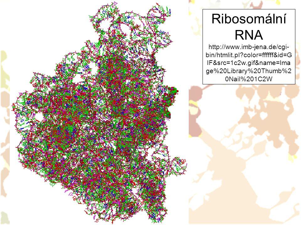 Ribosomální RNA http://www.imb-jena.de/cgi- bin/htmlit.pl?color=ffffff&id=G IF&src=1c2w.gif&name=Ima ge%20Library%20Thumb%2 0Nail%201C2W