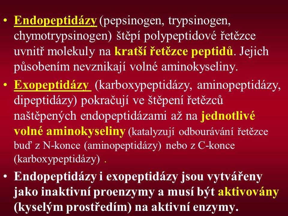 Endopeptidázy (pepsinogen, trypsinogen, chymotrypsinogen) štěpí polypeptidové řetězce uvnitř molekuly na kratší řetězce peptidů. Jejich působením nevz