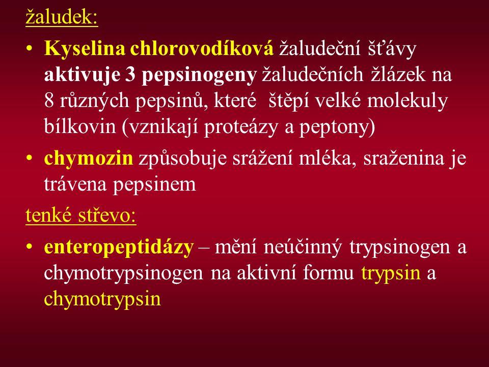 žaludek: Kyselina chlorovodíková žaludeční šťávy aktivuje 3 pepsinogeny žaludečních žlázek na 8 různých pepsinů, které štěpí velké molekuly bílkovin (