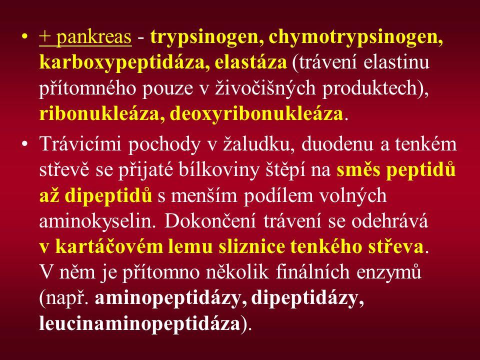 + pankreas - trypsinogen, chymotrypsinogen, karboxypeptidáza, elastáza (trávení elastinu přítomného pouze v živočišných produktech), ribonukleáza, deo