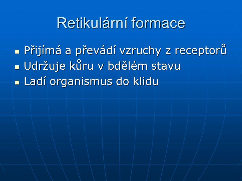 Retikulární formace Přijímá a převádí vzruchy z receptorů Přijímá a převádí vzruchy z receptorů Udržuje kůru v bdělém stavu Udržuje kůru v bdělém stav