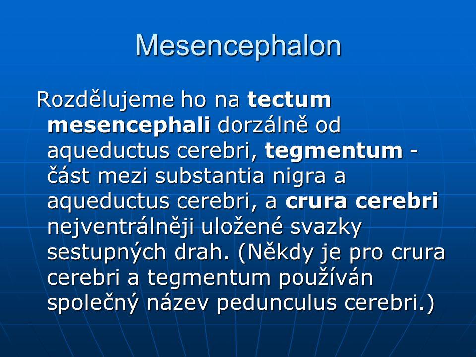 Mesencephalon Rozdělujeme ho na tectum mesencephali dorzálně od aqueductus cerebri, tegmentum - část mezi substantia nigra a aqueductus cerebri, a cru